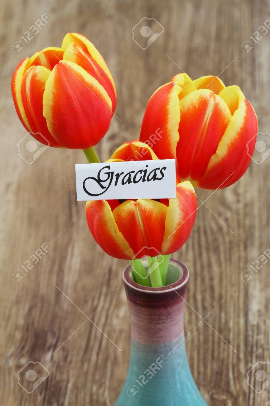 Gracias card which means thank you in spanish with red and stock gracias card which means thank you in spanish with red and yellow tulips stock izmirmasajfo Image collections