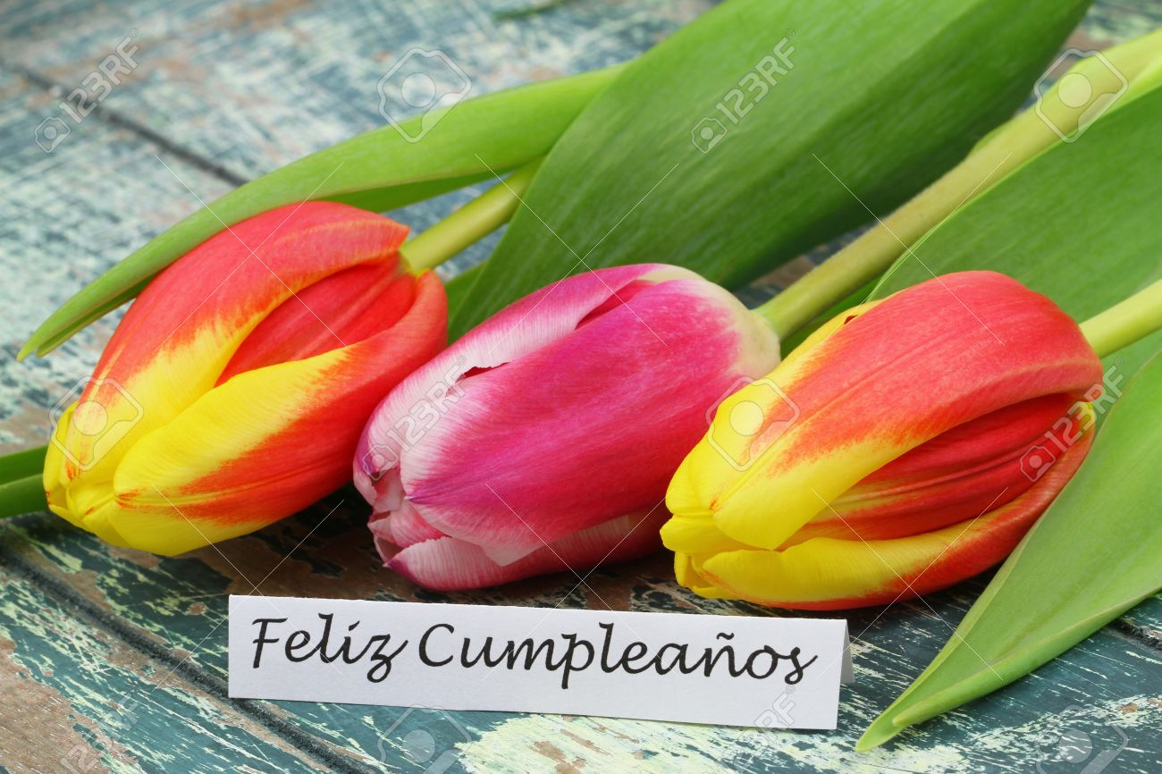Feliz cumpleanos happy birthday in spanish card with colorful feliz cumpleanos happy birthday in spanish card with colorful tulips stock photo 43423506 izmirmasajfo Image collections