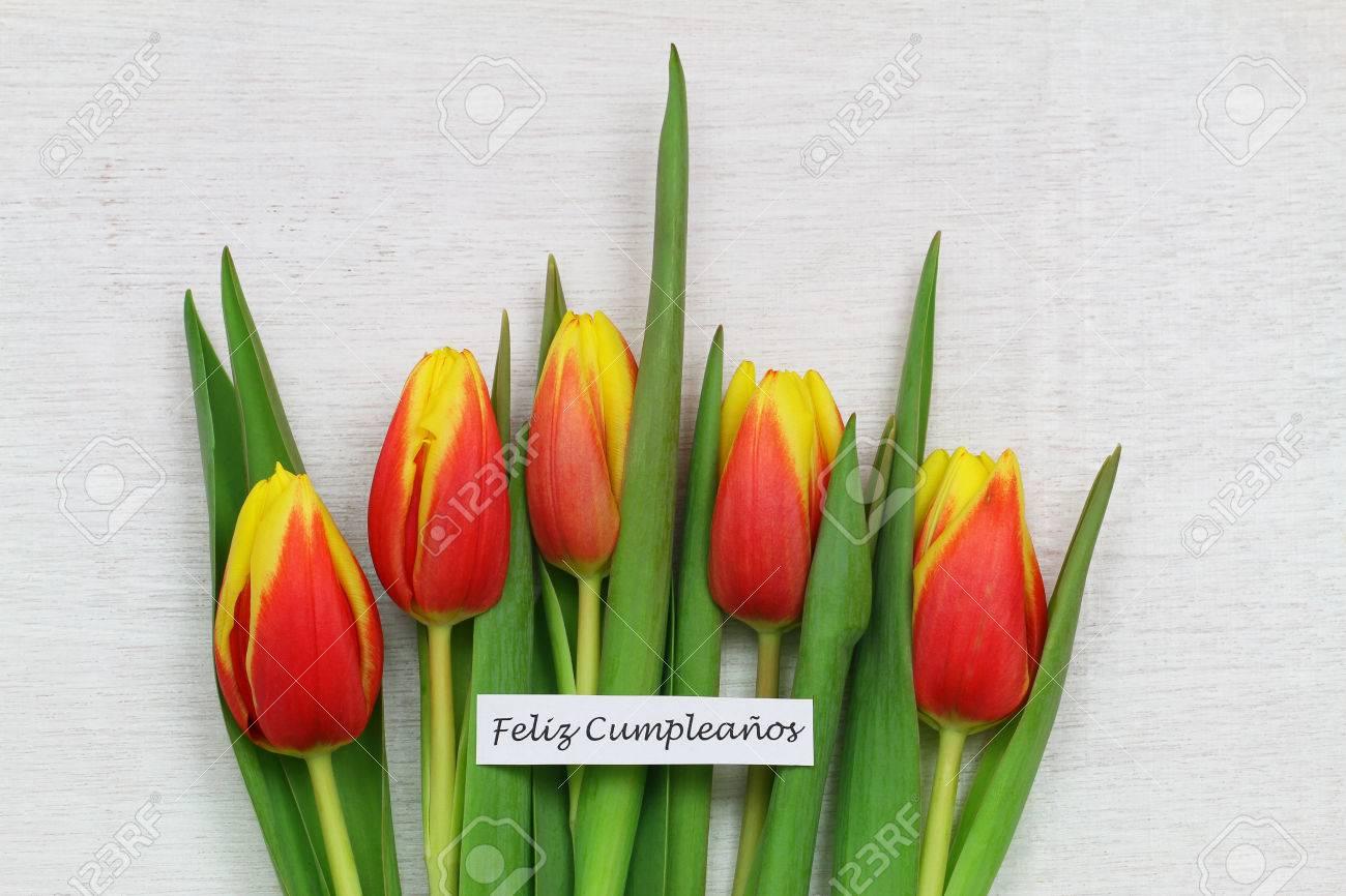 Feliz cumpleanos happy birthday in spanish with red and yellow feliz cumpleanos happy birthday in spanish with red and yellow tulips stock photo 44070421 izmirmasajfo Image collections