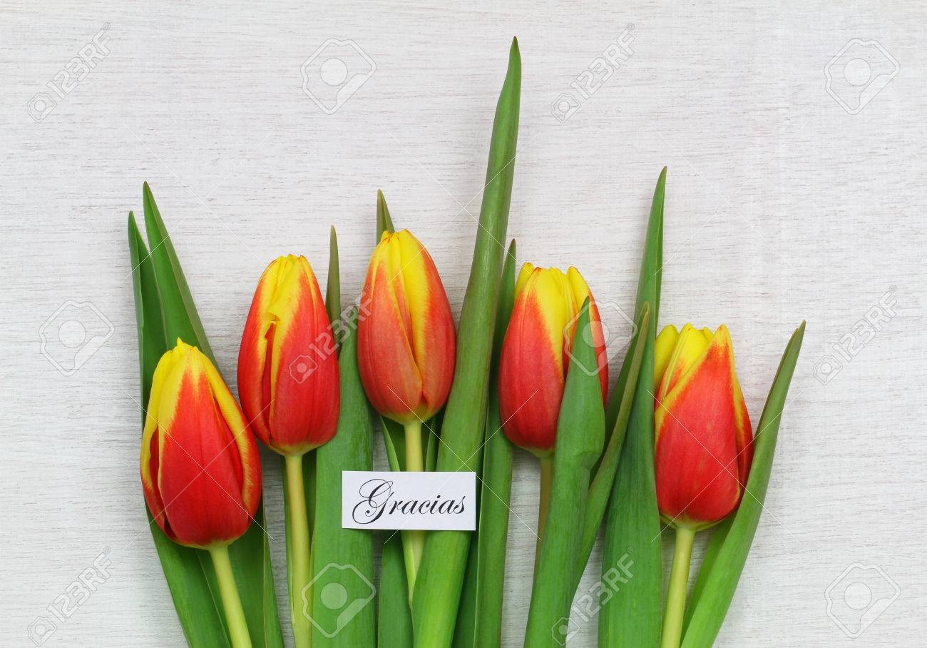 Gracias thank you in spanish card with red and yellow tulips stock gracias thank you in spanish card with red and yellow tulips stock photo 45231756 izmirmasajfo