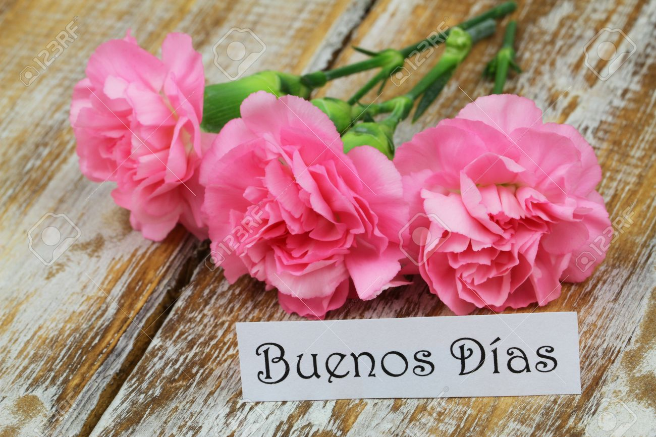 Buenos Dias Good Morning In Spanish Card With Pink Carnations Stock P O 50833249