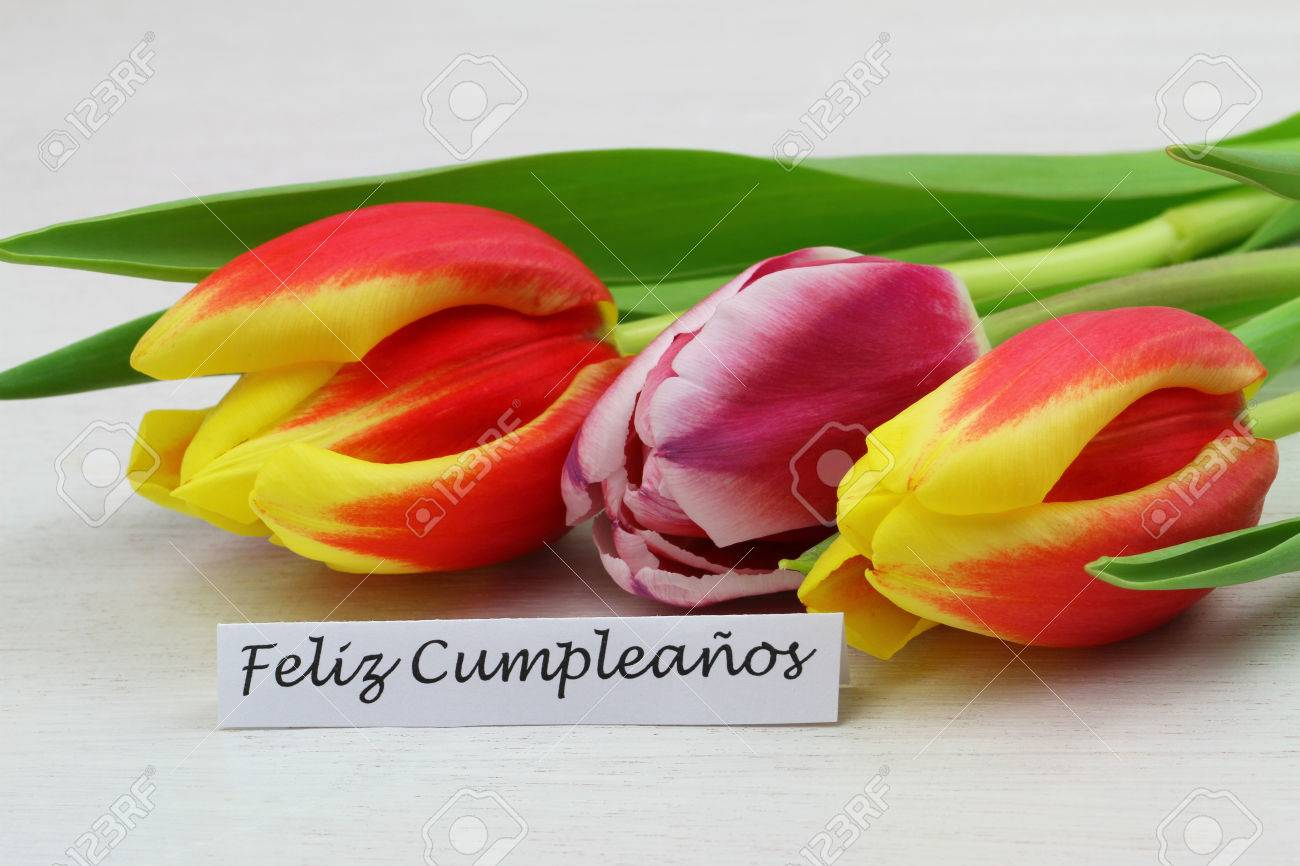 Feliz cumpleanos all which means happy birthday in spanish stock feliz cumpleanos all which means happy birthday in spanish card with colorful tulips stock izmirmasajfo Image collections