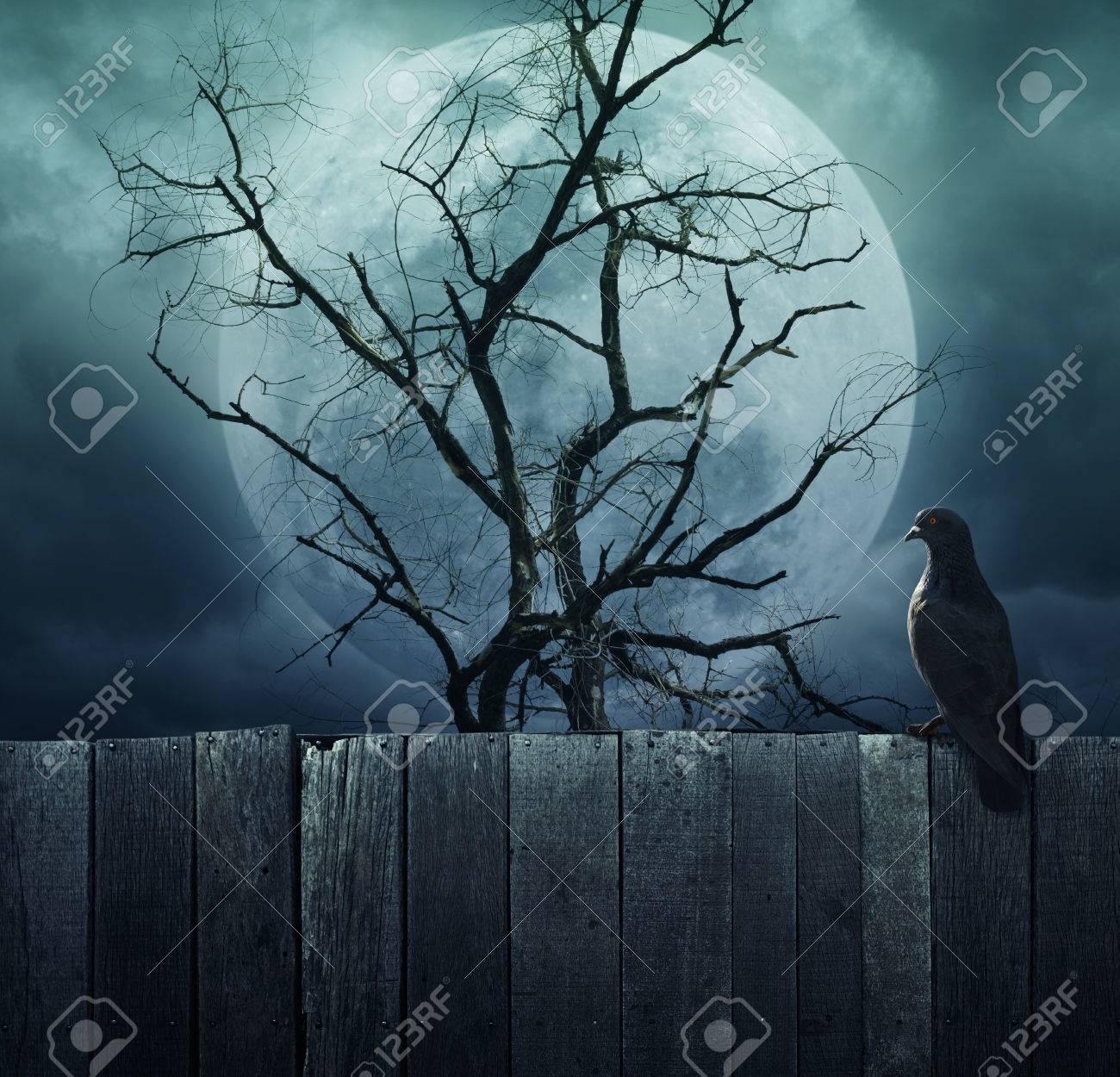 bird stand on wood fence on spooky tree with moon background