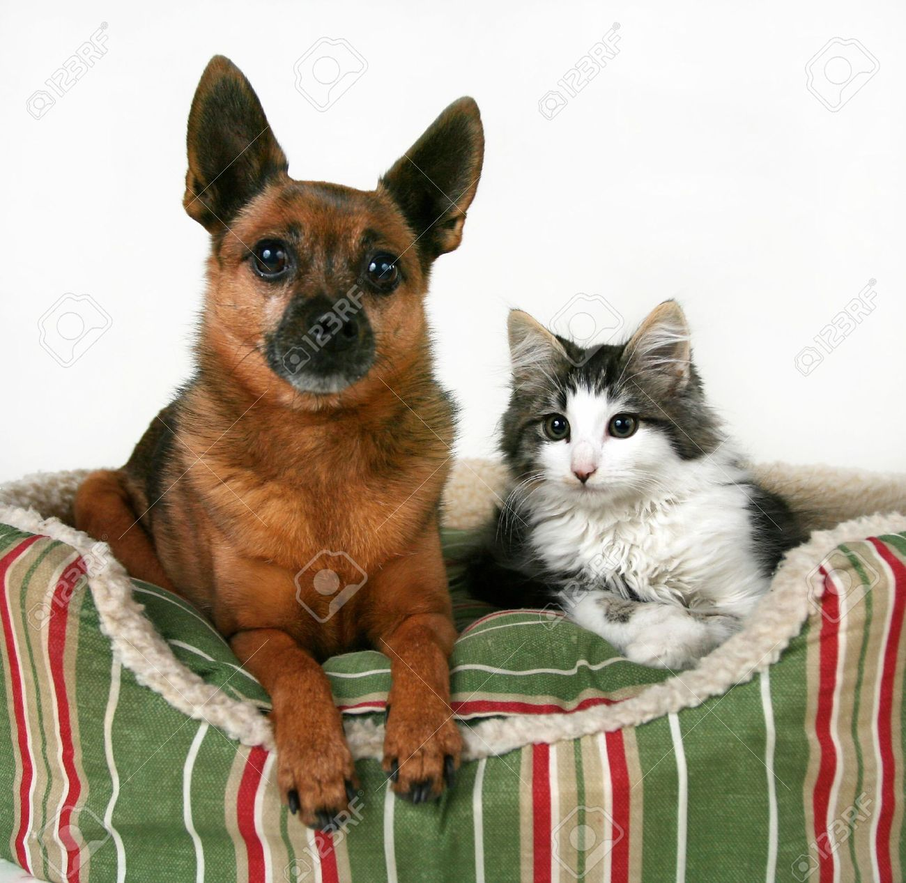 Cat Dog Breed Mix Mix Breed a Dog And a Kitten