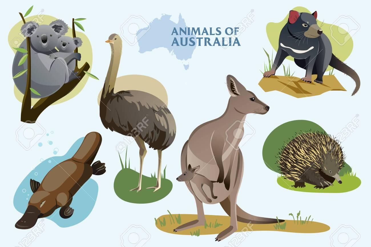 Vector illustration set of Australian wild animals - 137893675
