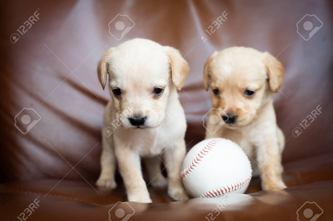 Cute Little Puppies Stock Photo Picture And Royalty Free Image