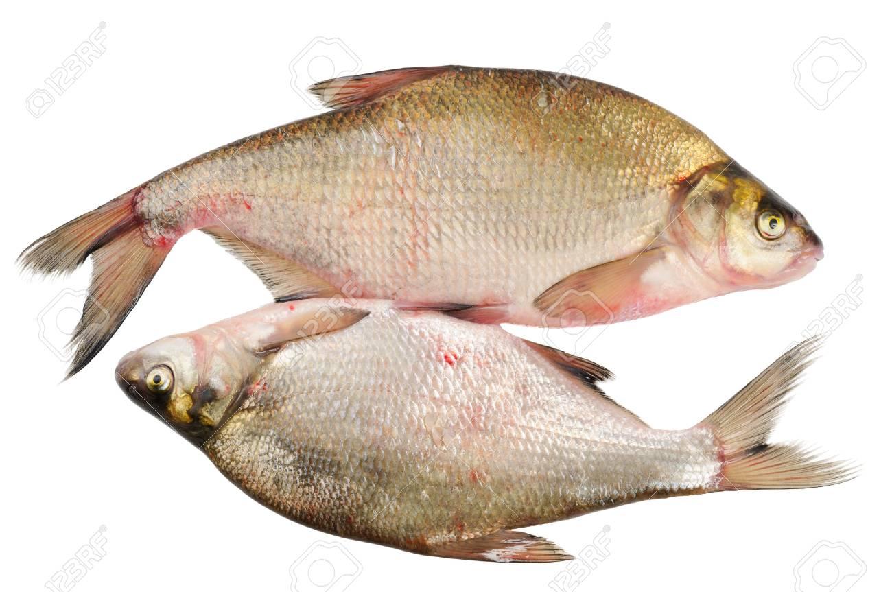 Freshwater fish bream - Two Fresh Freshwater Fish Bream Isolated On White Stock Photo 10720572