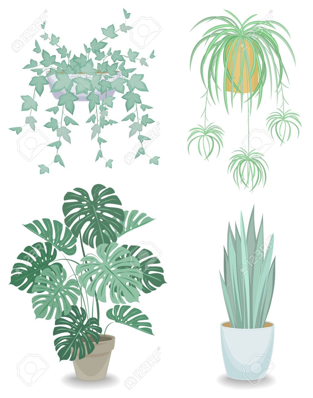 Collection. Indoor plant in a pot. Chlorophytum, monster, sansevieria, ivy. Beautiful decorative flowerpot. Vector illustration of a set - 149664138