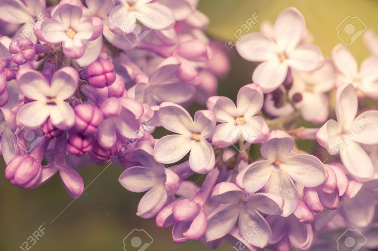 Blooming Primer Plano De Flores De Color Lila Filtro Pastel Suave - Color-lila-pastel
