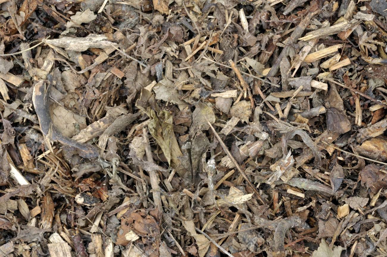 Holzhackschnitzel Blätter Und Rinde Biomasse Aus Einem Mulcher Für