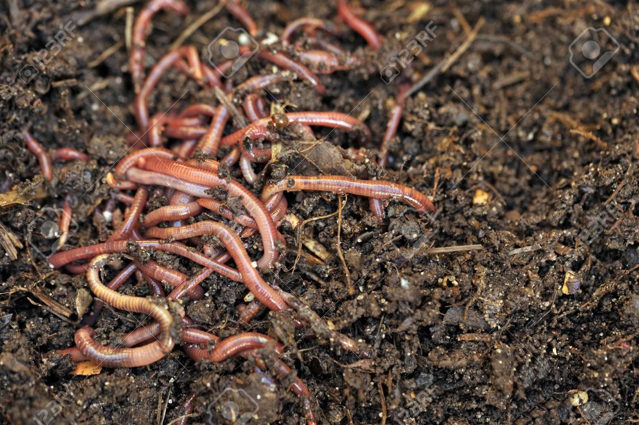 Garten Kompostierung Würmer Recycling-Anlage Und Küche Lebensmittel ...