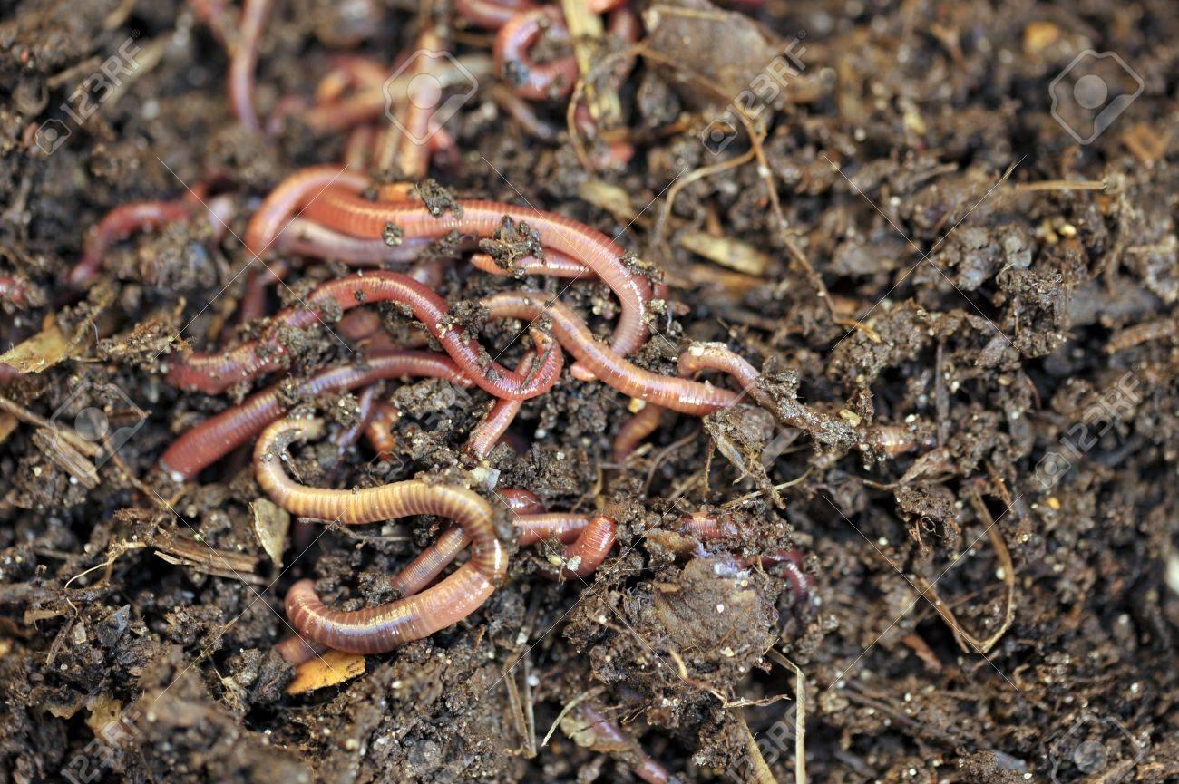 Garten Kompost Und Würmer Recycling-Anlage Und Küche Lebensmittel ...
