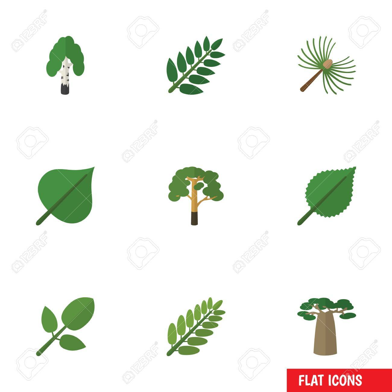 Flat Icon Bio Set Of Timber Wood Acacia Leaf And Other Vector