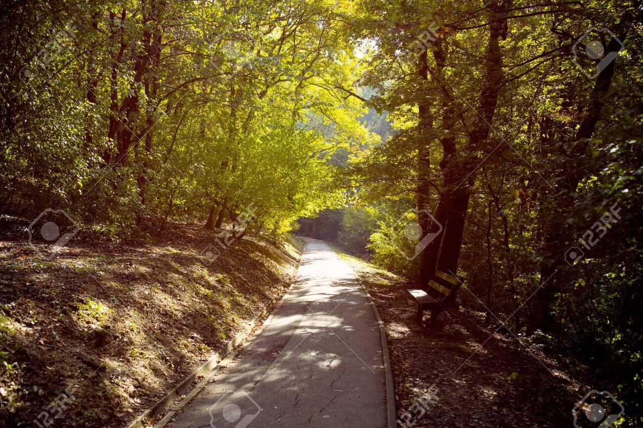 National Forest Park, Natural summer landscape background - 134962255