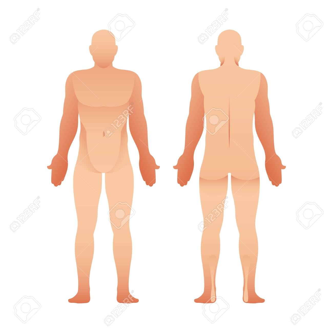 silhouettes of man front and back view vector human body royalty free cliparts vectors and stock illustration image 135766540 silhouettes of man front and back view vector human body