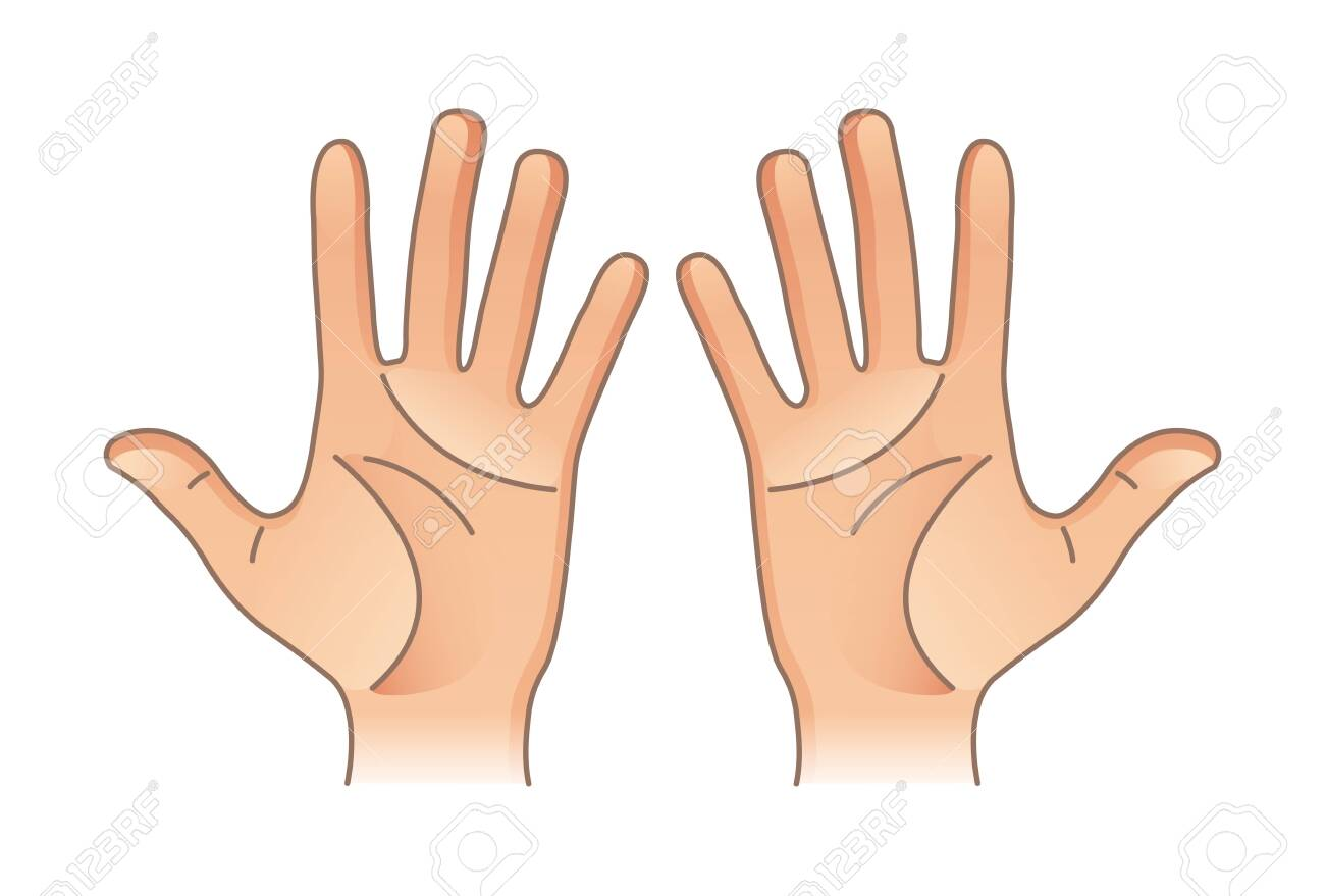 Human body parts. Male and female hands. Left and right - 142070781
