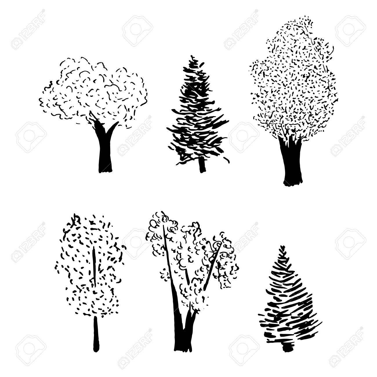 baum skizze. vektor-illustration von hand gezeichneten pflanzen mit