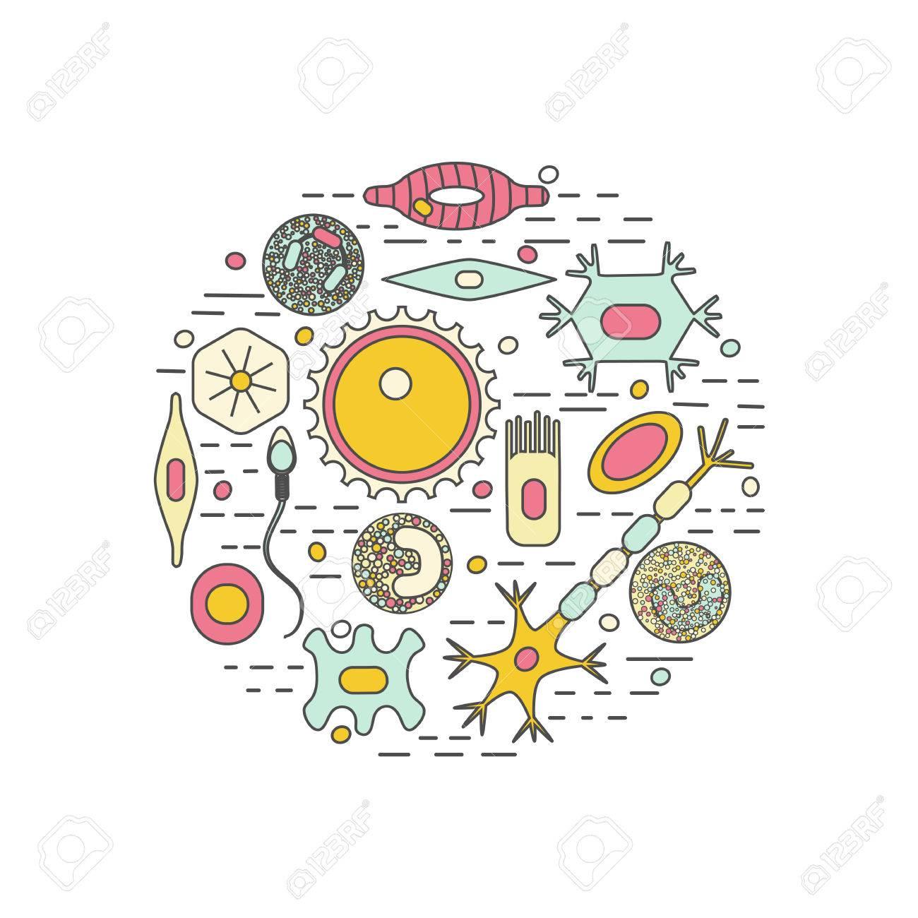 Populares Icono De Conjunto Diferente Tipos De Células Humanas. Ilustración  LN51