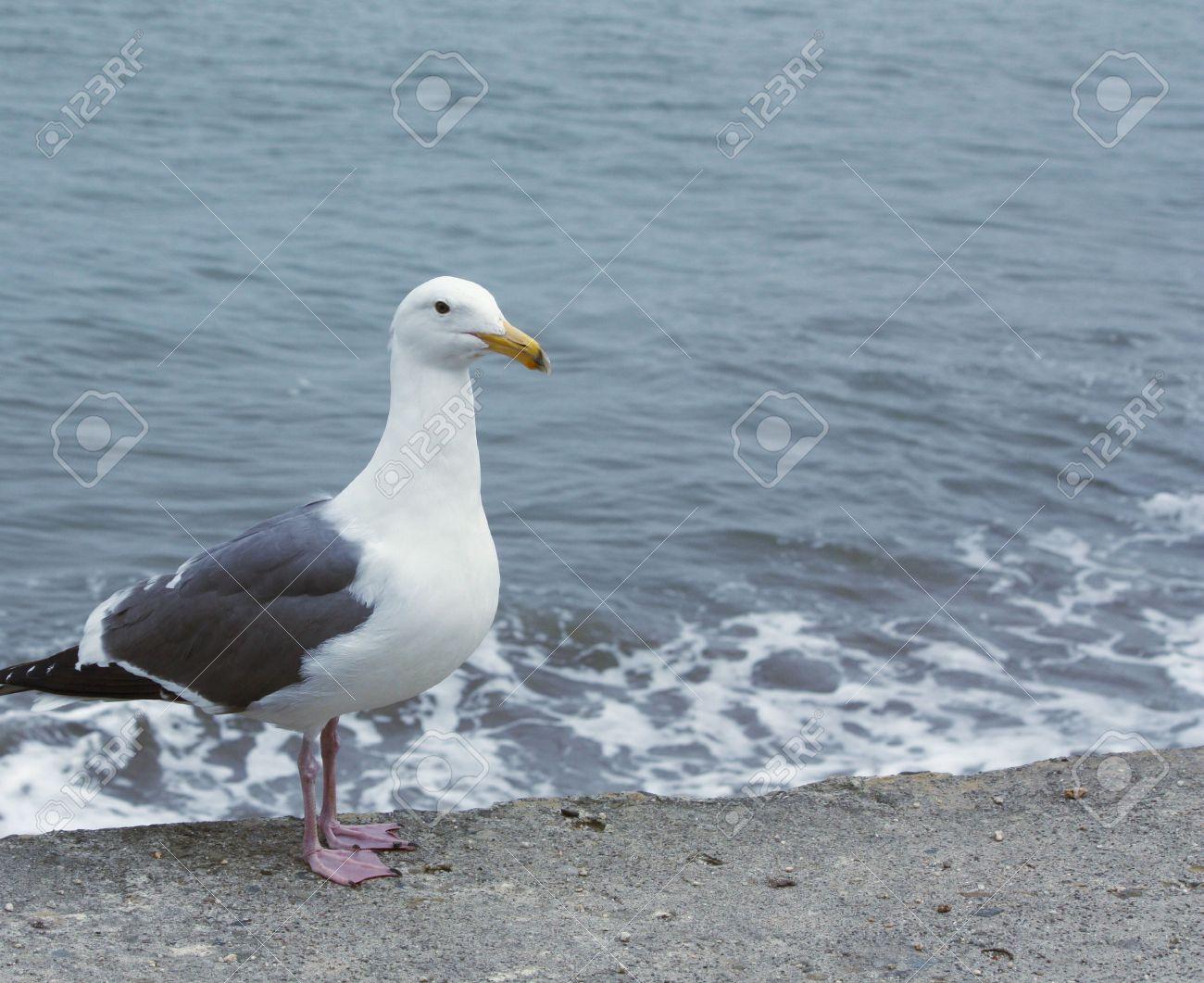Sea gull by the sea Stock Photo - 6539993