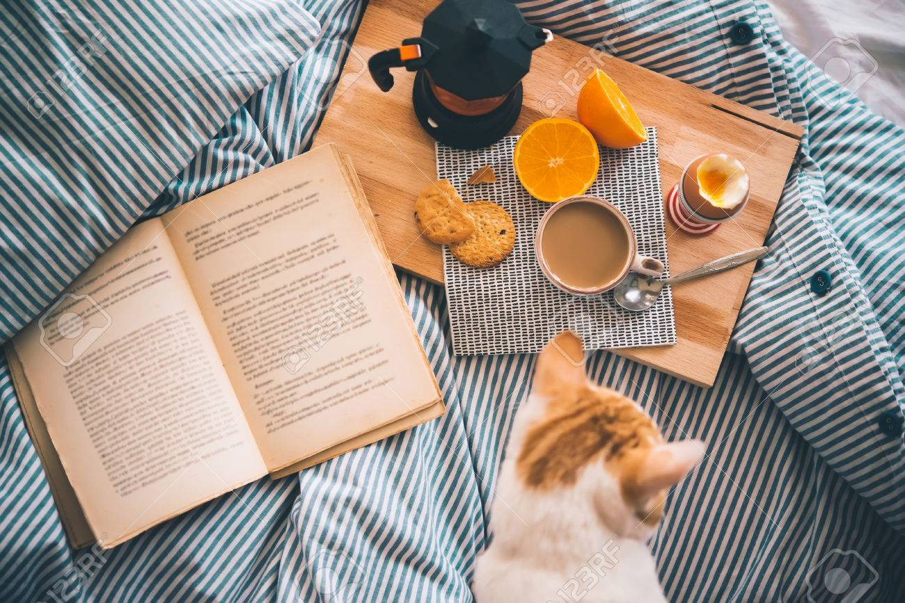 Breakfast served in bed - boiled egg, fresh orange, cookies and coffee, while reading a book and cuddling a cat. Selective focus. Toned picture - 61193522