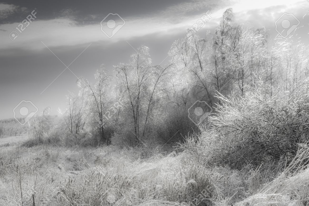 Black and white low contrast soft photo of generic winter landscape