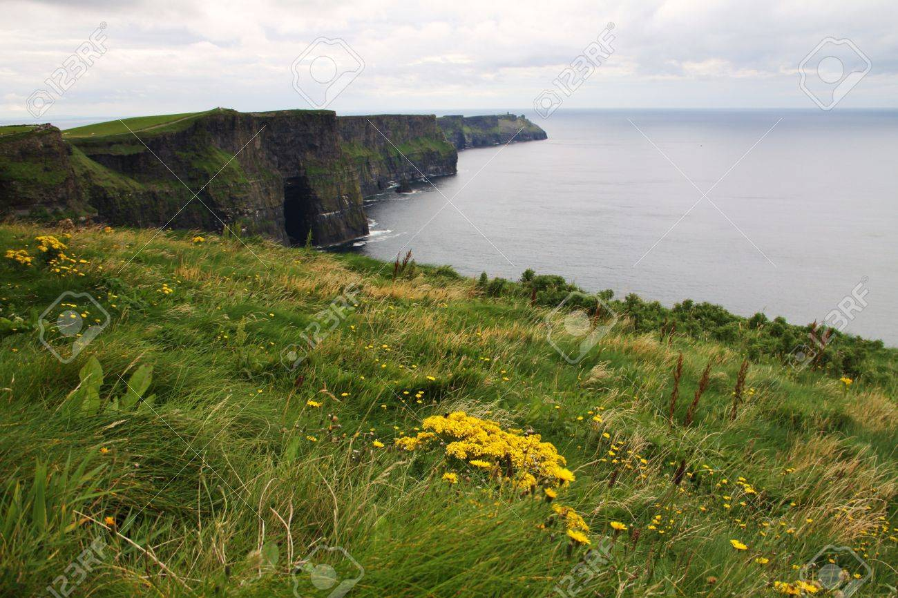 Meadow With Yellow Flowers On The Cliffs Of Moher In Ireland Stock