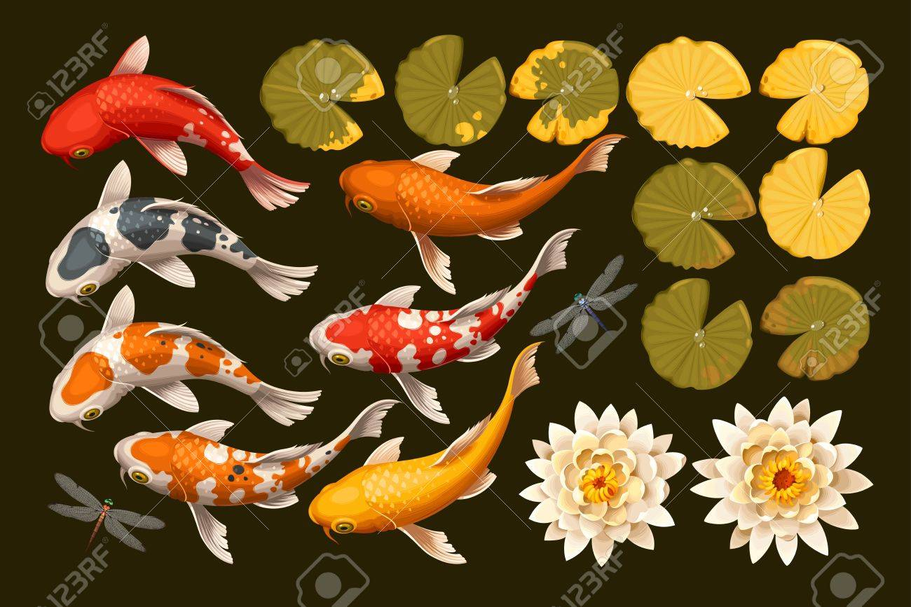 Vector set of koi fish and lotus flowers and leaves - 63430576
