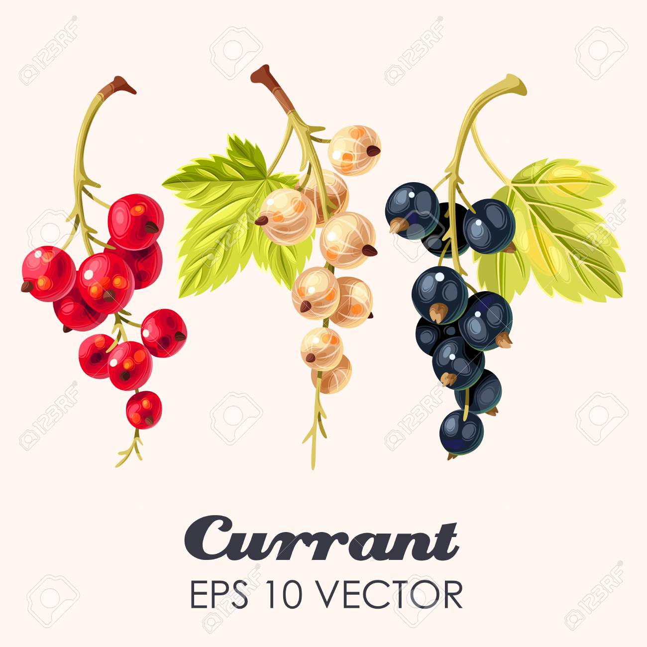 set of high detailed currant berries - 106726468