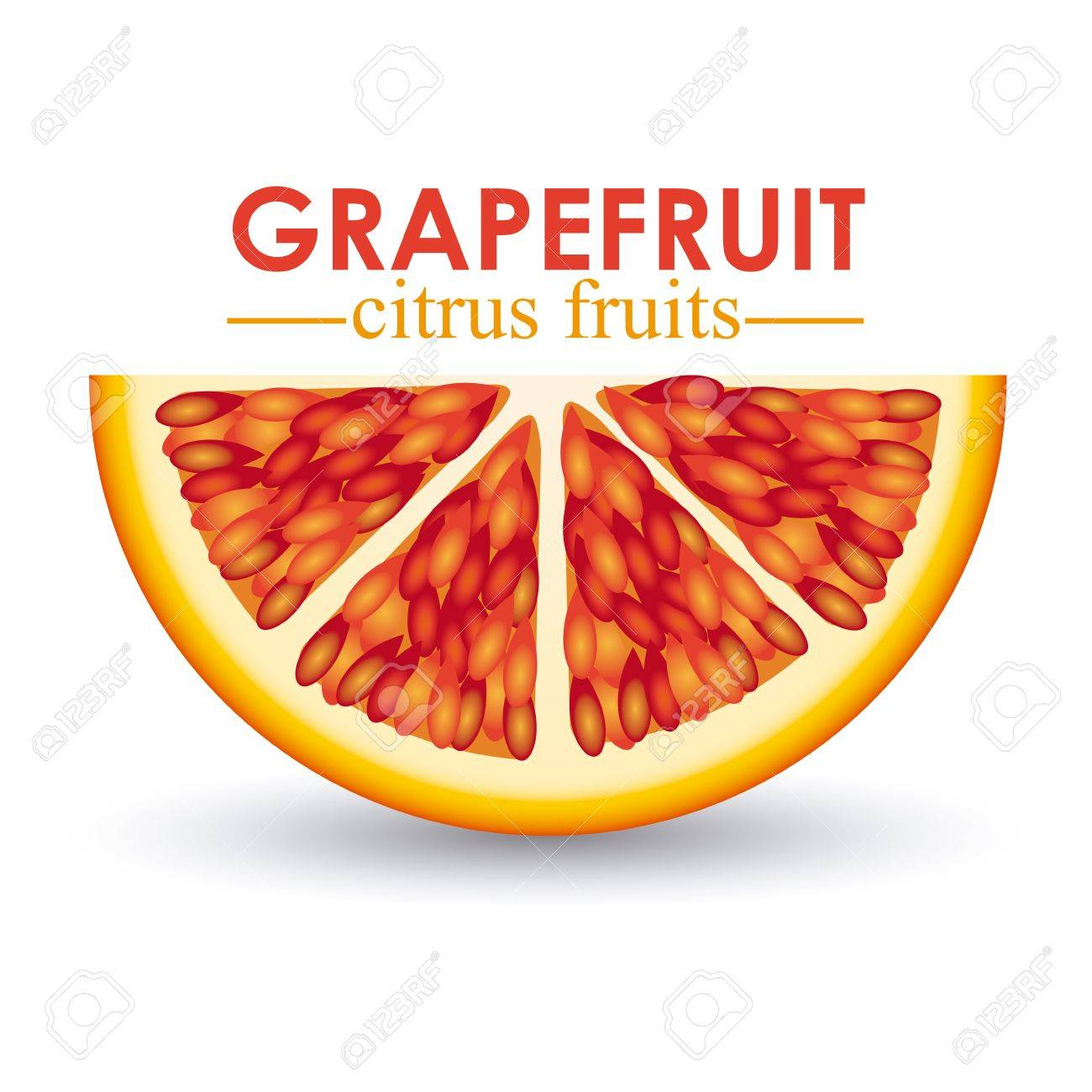 grapefruit citrus fruit  over white background vector illustration Stock Vector - 22067074