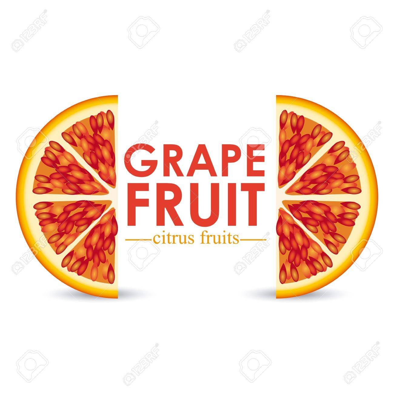 grapefruit citrus fruit  over white background vector illustration Stock Vector - 22067089