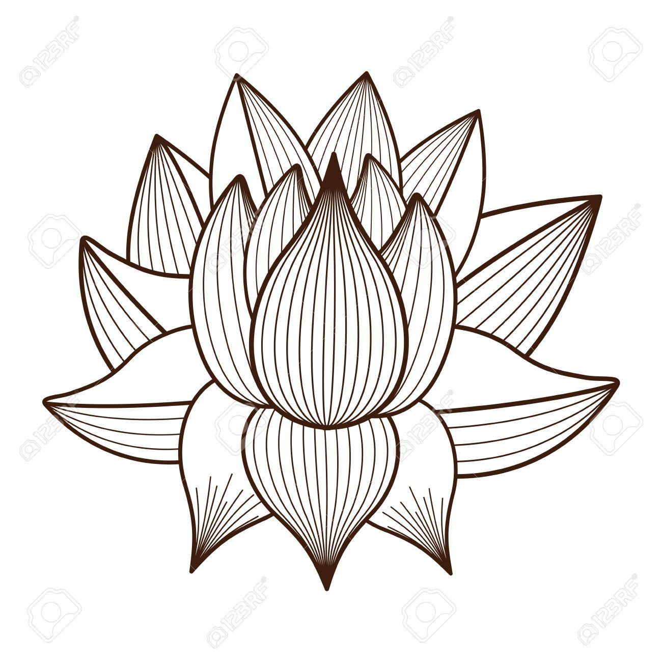 Lotusbloem Tekening Geisoleerd Pictogram Ontwerp Vector Illustratie
