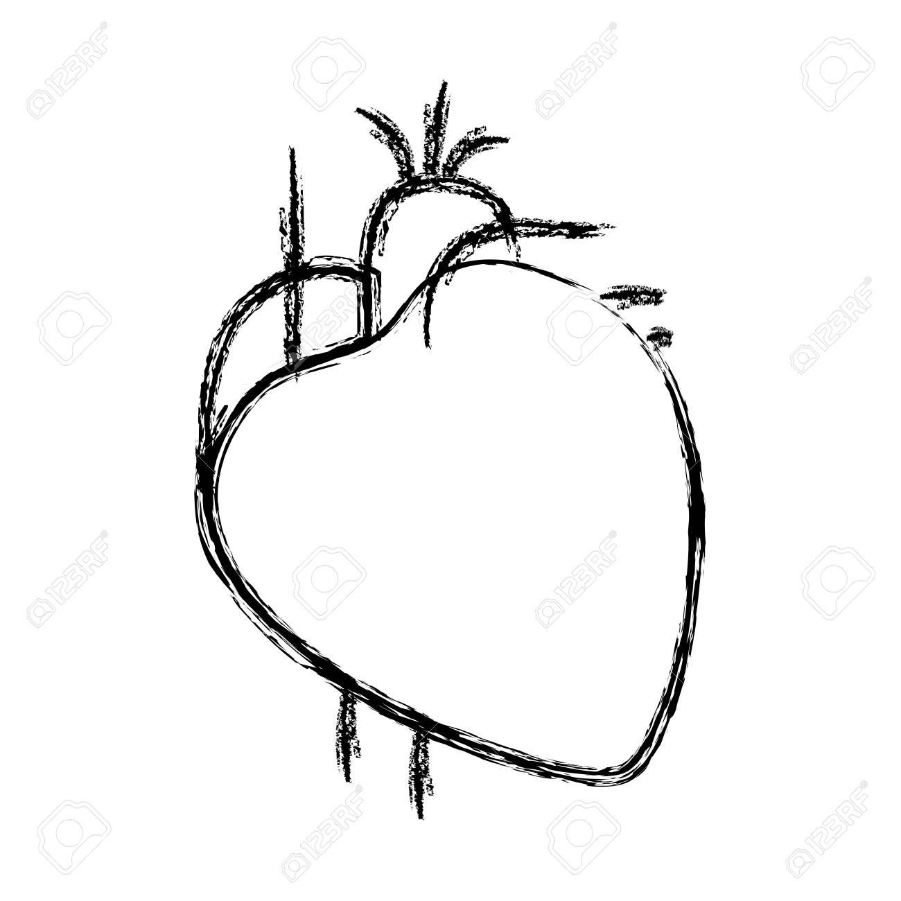 Unscharfe Handzeichnung Kontur Herz System Menschlichen Körper ...