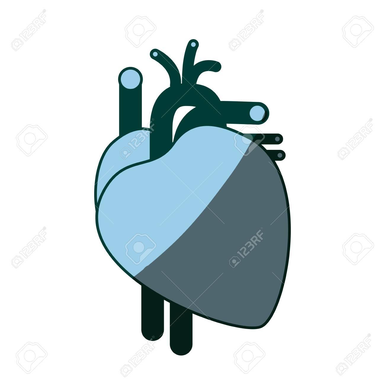 Blaue Farbe Schattierung Silhouette Herz System Menschlichen Körper ...