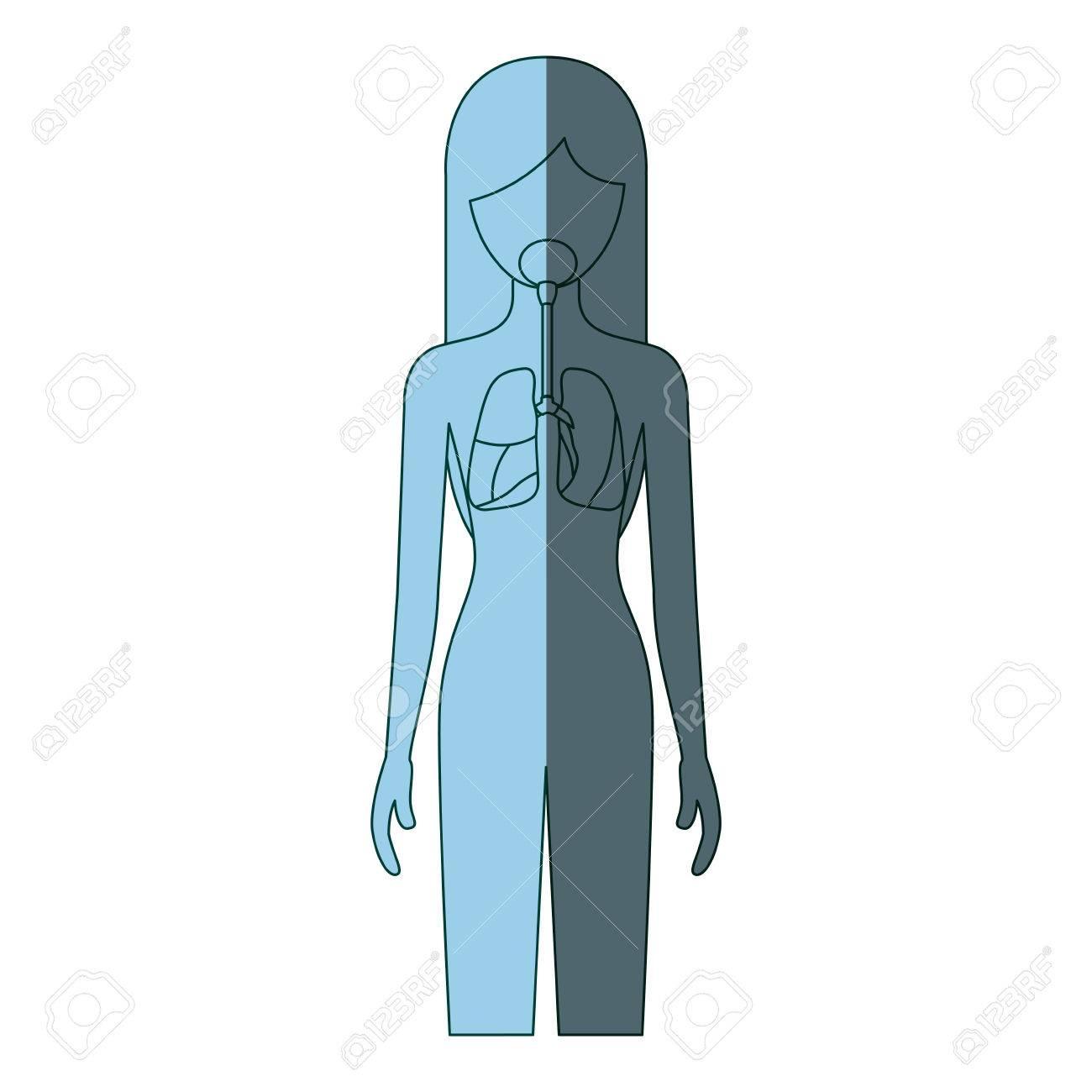 Blaue Farbschattierung Silhouette Weibliche Person Mit Menschlichen ...