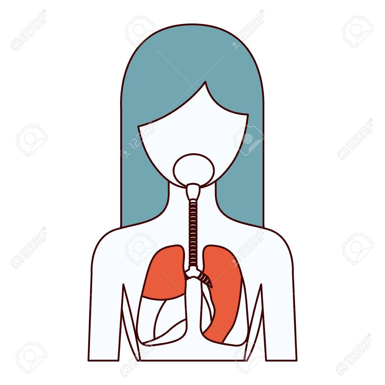 Atemberaubend Anatomie Des Menschlichen Atmungssystems Bilder ...