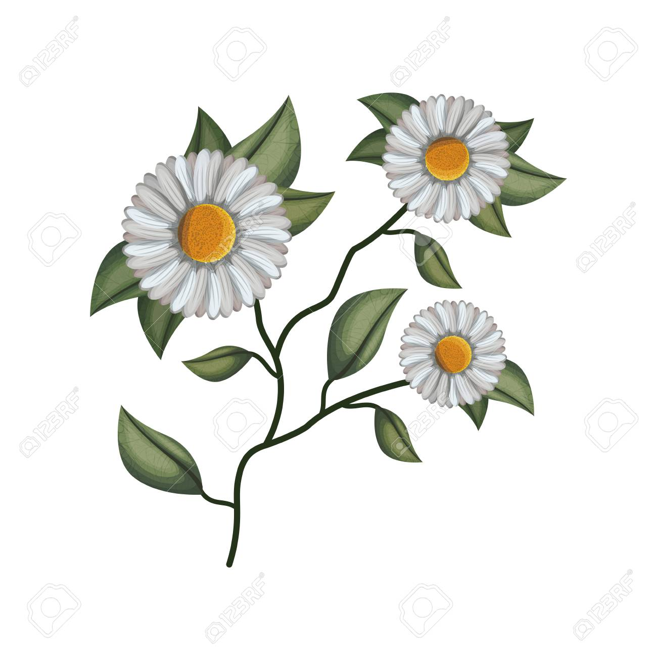 Cute Daisy Flower With Leafs Decorative Vector Illustration Design