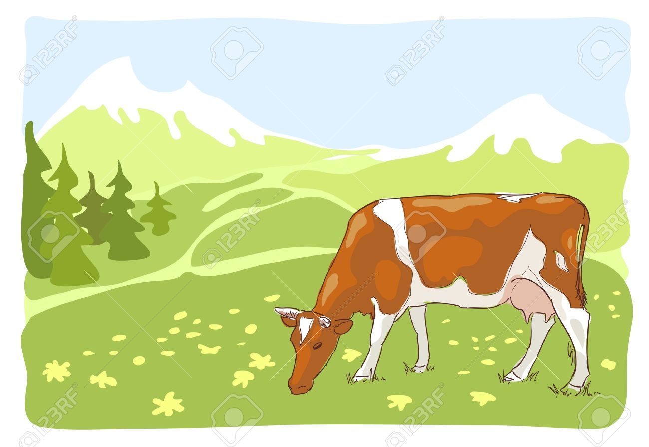 The white and red cow is grazed on the Alpine meadow. Vector illustration. Stock Vector - 15290337