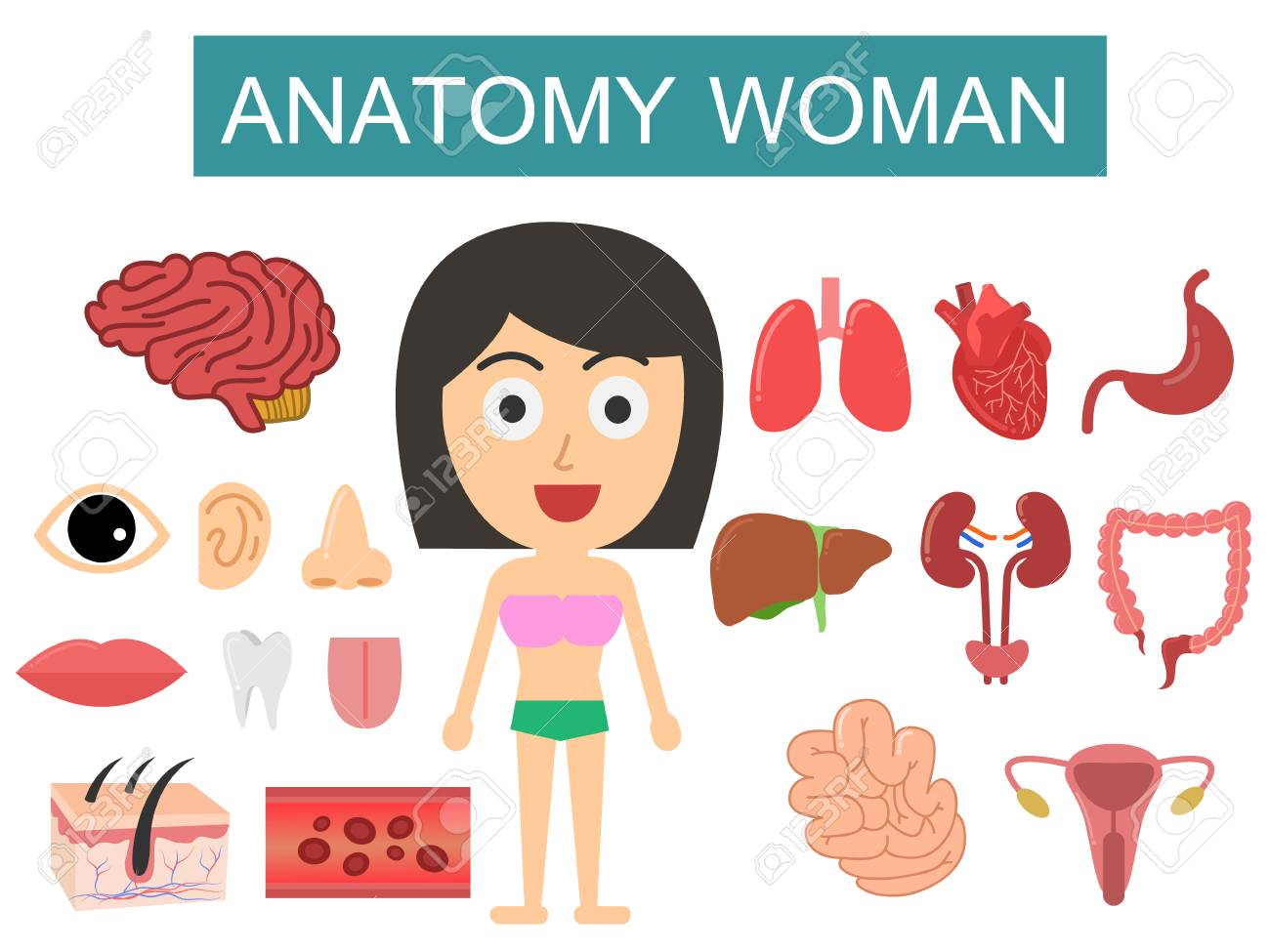 Human Body Anatomy Woman On White Background Royalty Free Cliparts ...