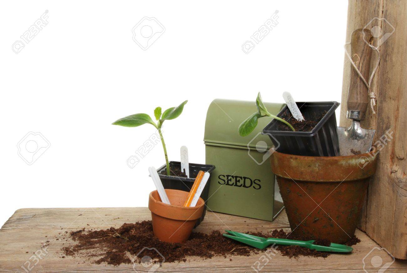 Remarkable Plant Seedlings And Garden Tools On A Wooden Potting Bench Against Caraccident5 Cool Chair Designs And Ideas Caraccident5Info