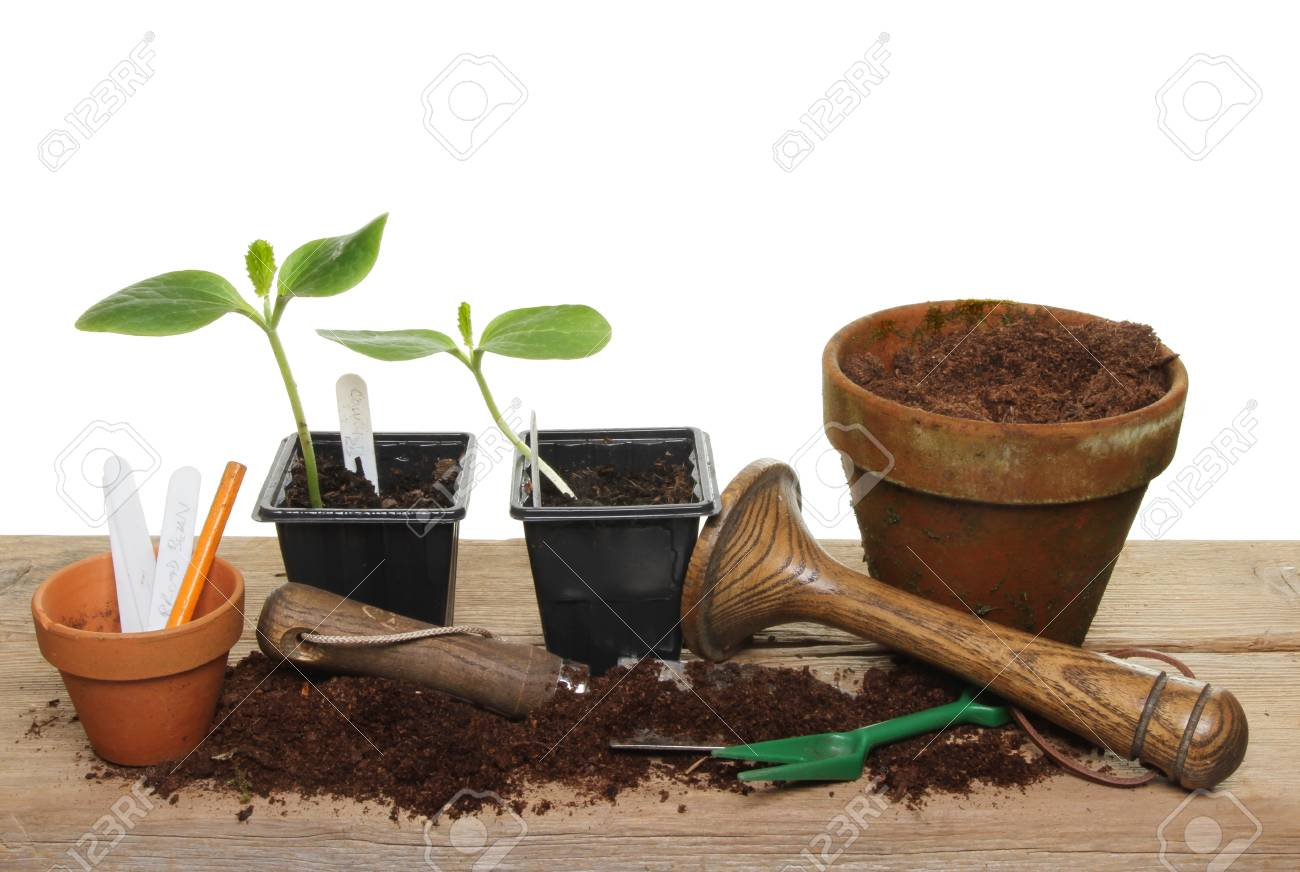 Enjoyable Courgette Vegetable Plant Seedlings And Garden Tools On A Wooden Gmtry Best Dining Table And Chair Ideas Images Gmtryco
