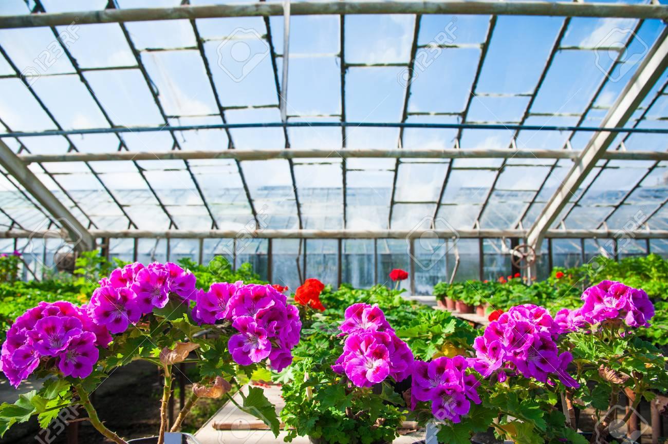 Immagini Piante E Fiori serra con una varietà di piante e fiori