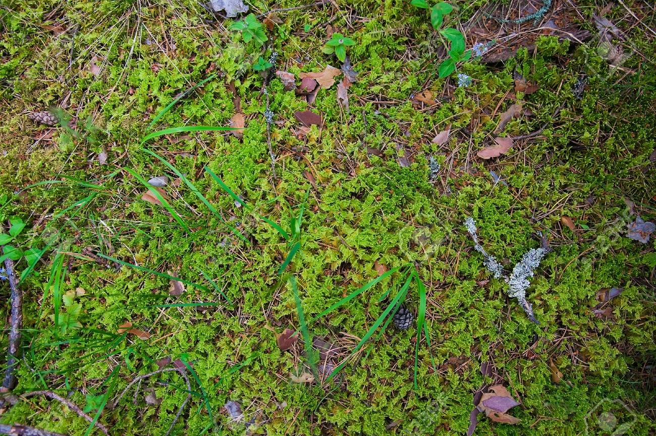 forest soil with grass top view forest ground with plants stock
