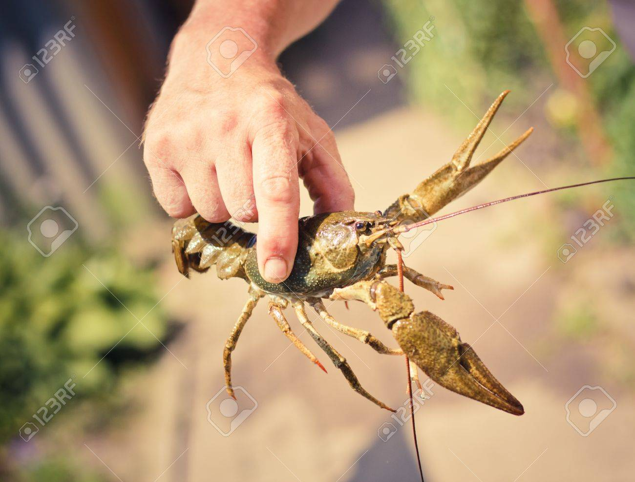 The crawfish in hand near the river. Stock Photo - 11297321