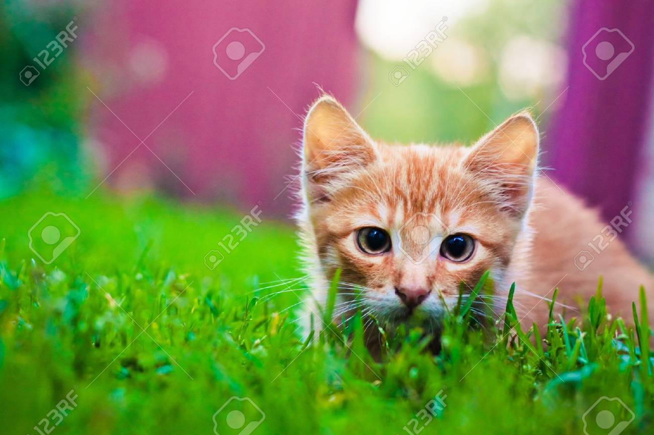 Young kitten in grass outdoor shot at sunny day Stock Photo - 11740716