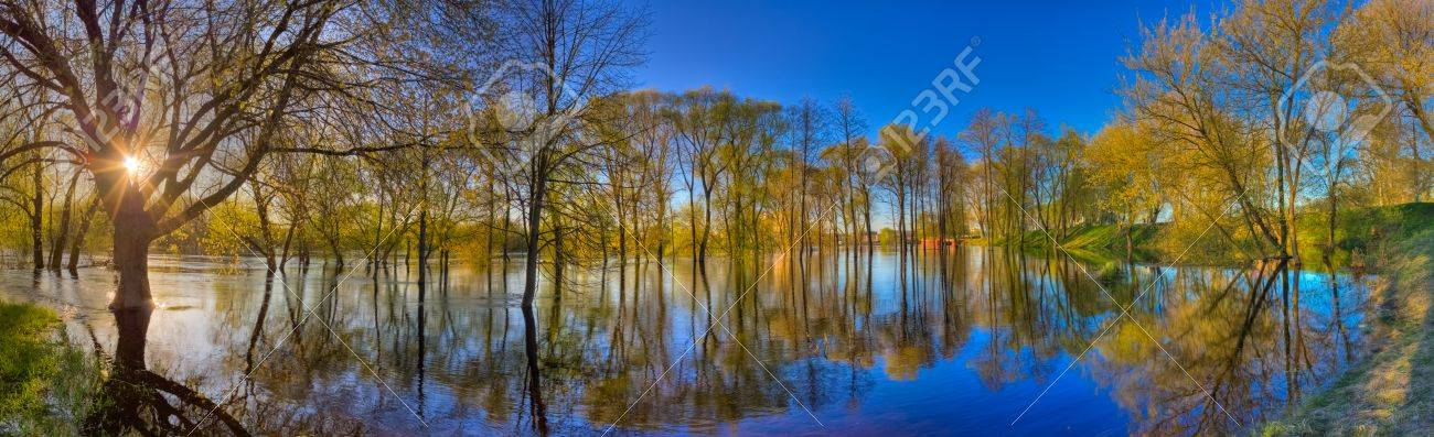 River and spring forest  Nature composition Stock Photo - 17156323