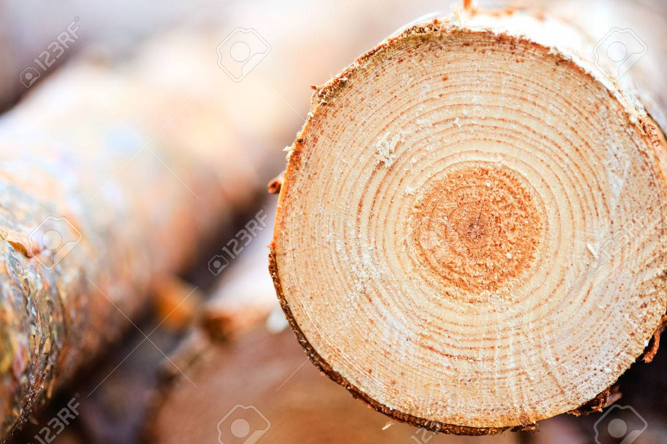 Superb Pine Tree Timber #5: Annual Rings On Sawn Pine Tree Timber Wood Texture Stock Photo - 27404224