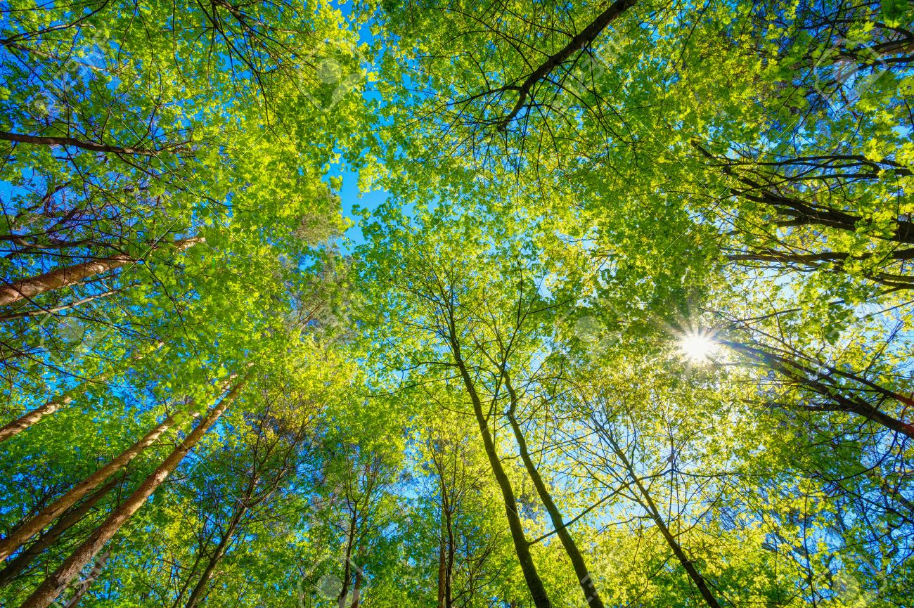 Image result for pictures of the trees in the sunlight