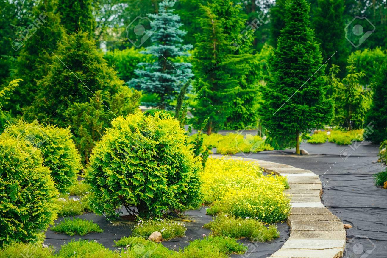 Stone Pathway In Garden Park. Green Decorative Bushes In Garden ...