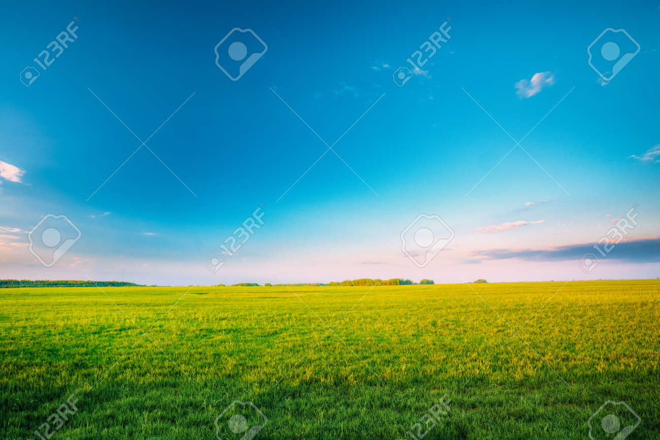 Agricultural Landscape. Countryside Rural Field Landscape Under Scenic Spring Blue Clear Sunny Sky. Skyline. - 148748634