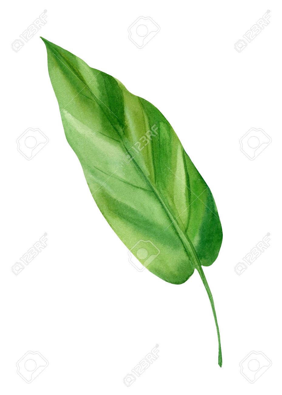 флора зеленый